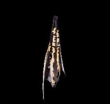 深淵の龍骸布・橙の画像