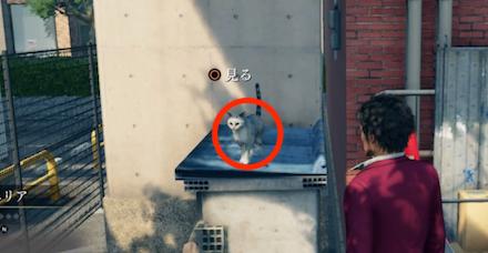 神内駅西エリアのネコ