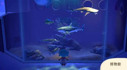 博物館の内装(魚)