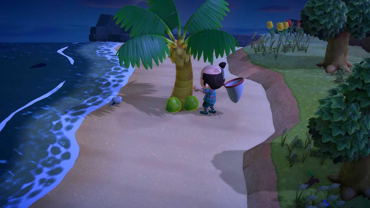 島にあるものを自由に持ち帰れる