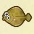 Olive Flounder Image