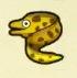 Moray Eel Image