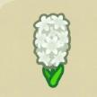 白いヒヤシンス画像
