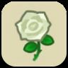 白いバラ画像
