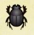 Dung Beetle Image