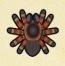 Tarantula Image