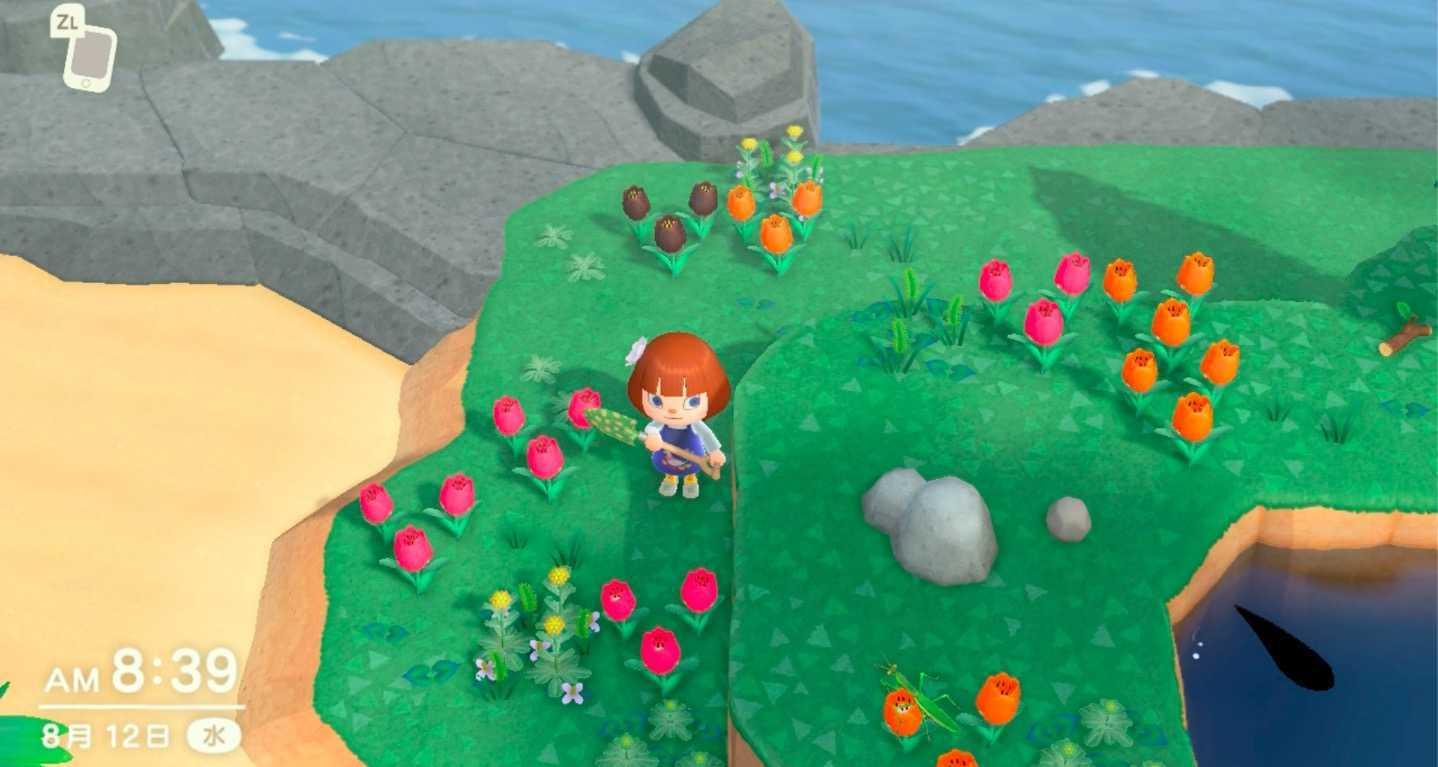 珍しい花が咲く島