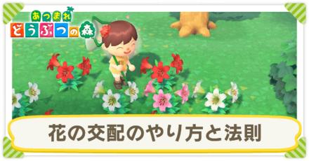 あつ 森 お花