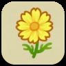 黄色いコスモスの画像