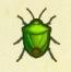 Stinkbug Image