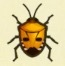 Man-Faced Stink Bug Image