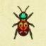 Tiger Beetle Image