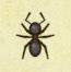 Ant Image