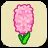 Pink Hyacinth Icon