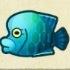 Napoleonfish Image
