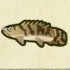 Saddled Bichir Icon