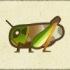 Migratory Locust Image