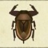 Giant Water Bug Image