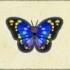 Great Purple Emperor Image