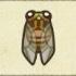 Evening Cicada Image