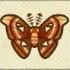 Atlas Moth Image