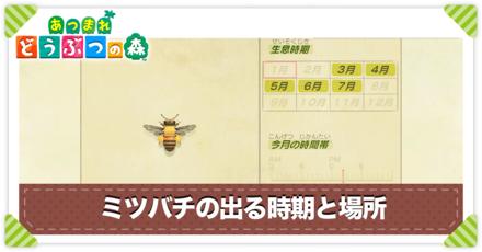 ミツバチの値段と出る時間