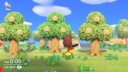 フルーツの木のみがなる島