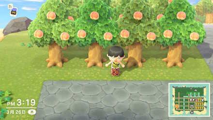 木を増やす