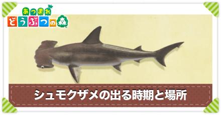 シュモクザメの値段と出る時間
