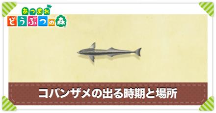 コバンザメの値段と出る時間