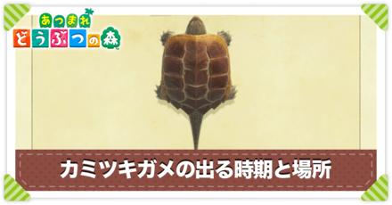 カミツキガメの値段と出る時間