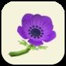 紫のアネモネの画像
