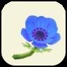 青いアネモネの画像