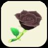 黒いバラの画像