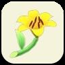 黄色いユリの画像