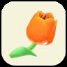 オレンジのチューリップの画像