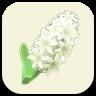 白いヒヤシンス.png