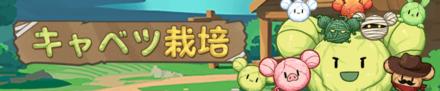 content_cabbagefarm.png