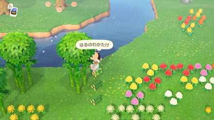 はるのわかたけ(春の若竹)