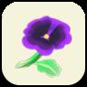 紫のパンジーの画像