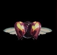 猟虫アムルマリキータⅢ速の画像