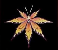 猟虫シナトオオモミジⅢ癒の画像