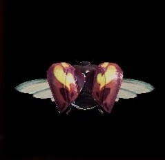 猟虫アムルマリキータⅢ攻の画像
