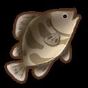 高級桂魚の画像