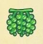 ウミブドウ画像