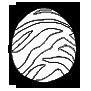 飛竜の卵画像