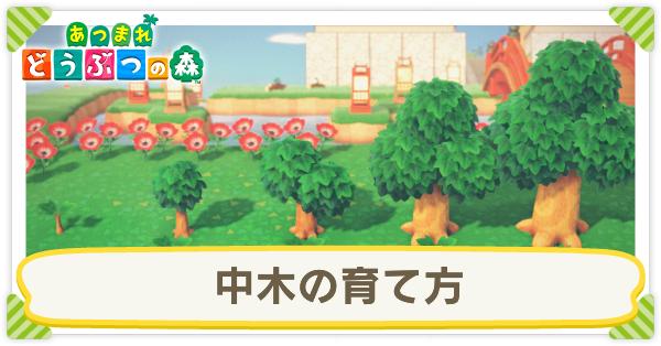 を あつ の 止める 森 木 成長