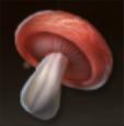 粗悪の煉紅菌Ⅰ(一般)の画像