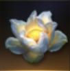 貴重な金蕊花Ⅱ(伝説)の画像