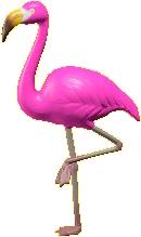 めすのフラミンゴ画像